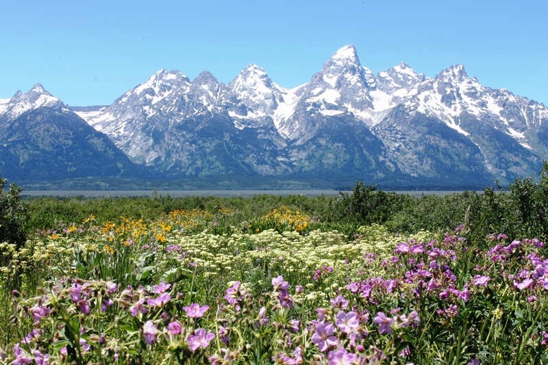 Grand Tetons with wildflowers. Photo courtesy The CEO.